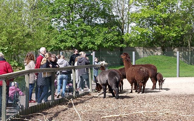 rabat til Odense Zoo dogging roskilde