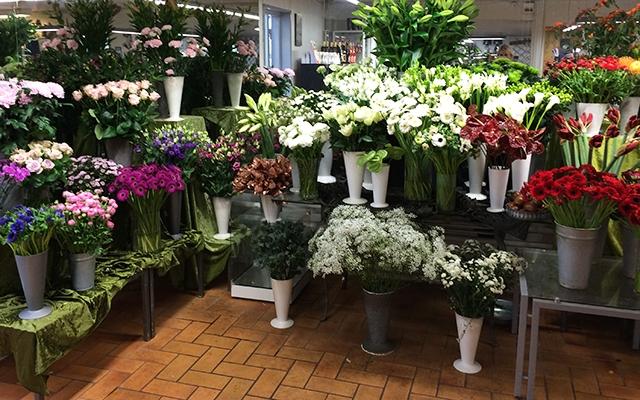 Deal.dk   blomster, planter og krukker