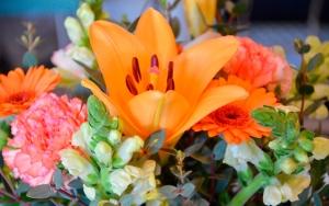 Forårets blomster