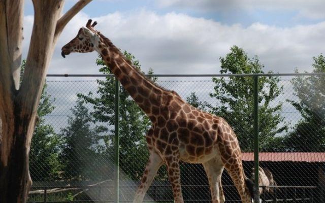 escort odense herning zoo