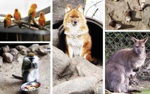 En dag med dyr
