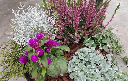En verden af planter
