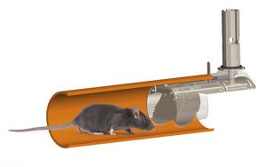 Undgå rotter i hjemmet