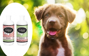 Hundeshampoo og balsam