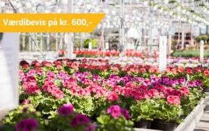 Fyld haven med blomster ✿