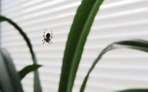 Bekæmpelse af edderkopper