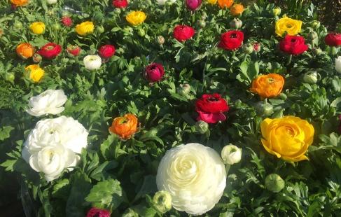 Farverig blomsterglæde