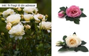 Langtidsholdbare roser ♥