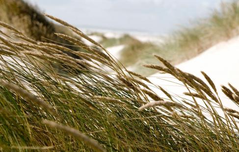 Oplev Vesterhavet ved Thy