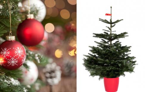 Få juletræet til døren