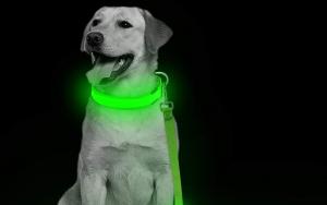 Hundesnor med LED-lys